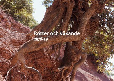 röttero växande
